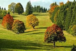 Rasen Düngen Herbst : kostenlose bild baum landschaft natur blatt hill ~ Watch28wear.com Haus und Dekorationen