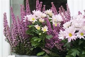Fleur D Hiver Pour Jardinière : des fleurs pour vos balcons en hiver ~ Dailycaller-alerts.com Idées de Décoration