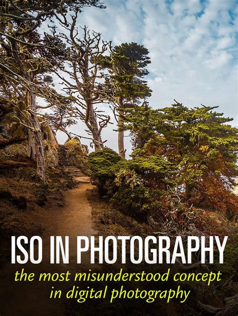 iso stand   photography iso settings