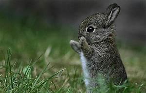 30 Most Cute An... Cute Animals