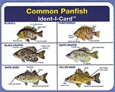 amazoncom ident  cards common panfish freshwater fish