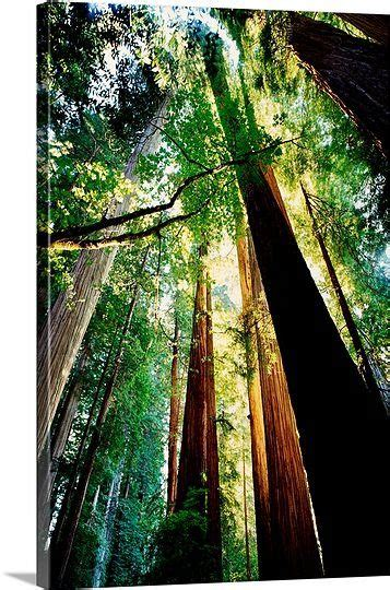 20 Best Images About Jedediah Smith Redwoods Sp On Pinterest