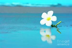 Tropical Flower On The Beach by MotHaiBaPhoto Prints