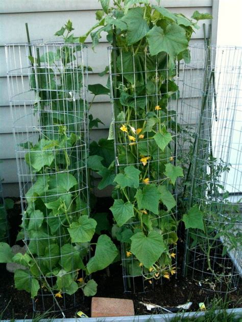 Vertical Gardening Zucchini by Vertical Gardening