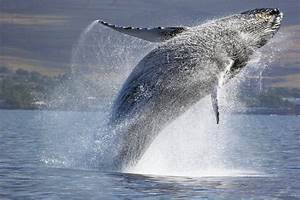 Where the whales frolick | MyClub