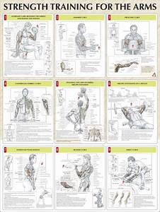 Perfect Pushup Workout Routine Chart 202 Best Images About Swole Like Whoa Cut Like What On
