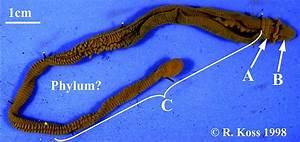 ZOOL 2250 Worm diversity quiz I