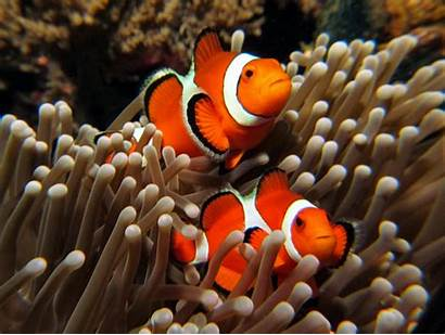 Nemo Wallpapers Fishes