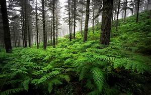 landscape forest pine trees overgrown with thick green