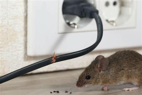 Mäuse Im Haus by M 228 Use Im Haus Garten Oder Auf Dem Dachboden