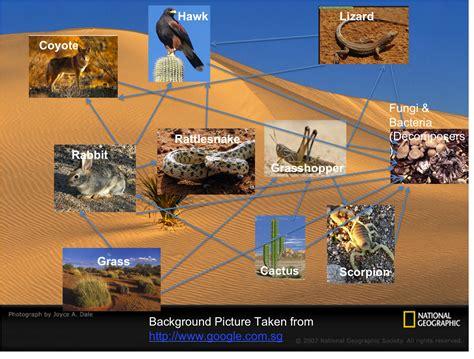 web cuisine desert food web imgkid com the image kid