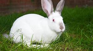Kaninchenkäfig Für 2 Kaninchen : eu parlament stimmt f r kaninchen k figverbot ~ Frokenaadalensverden.com Haus und Dekorationen