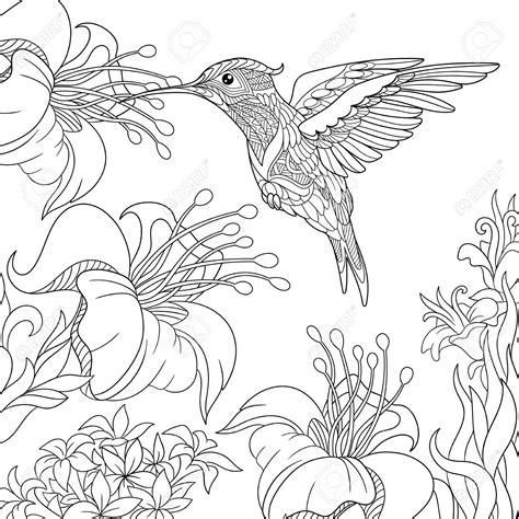 Cute Hummingbird Coloring Pages Printable Coloring Page