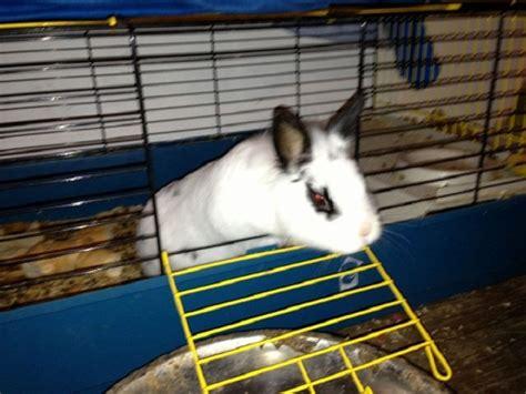 Coniglio In Gabbia - coniglio nano gabbia petpassion