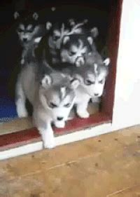 Safe For Work Puppy Gif Find Share On Giphy