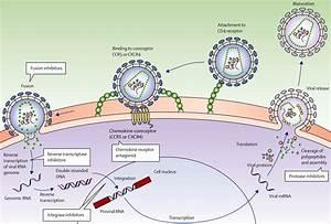 Pathogen Diversity