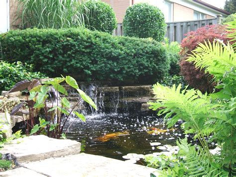 Backyard Garden Ponds by A Safe Simple Way To Prepare Your Backyard Pond Koi And