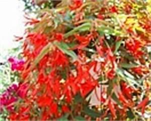 Ampelpflanzen Und Hängepflanzen Garten : balkonblumen i sommerblumen balkonbepflanzung sommerbepflanzung garten gestalten mit blumen ~ Buech-reservation.com Haus und Dekorationen