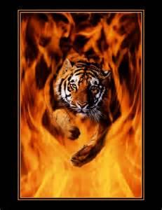Tiger Jumping through Fire