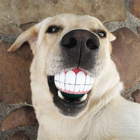 Top Inspiration Funny Pictures Of Dogs With Teeth