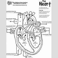 Free Heart Diagram Coloring Page Printable  Homeschool Giveaways