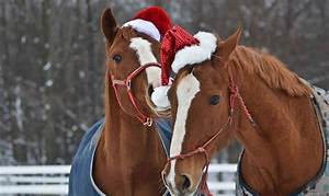 Christmas Horse... Funny Christmas Horse Quotes