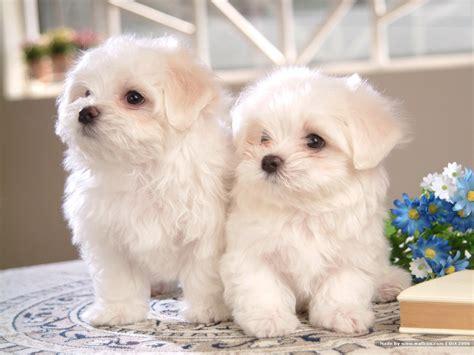 Meryem Uzerli Top 10 Cutest Dogs  Top 10 Lists Of