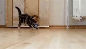 Hyper Cat GIF - Hyper - Discover & Share GIFs