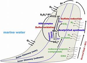 Microbial Sulfur Cycle In Two Hydrothermal Chimneys On The Southwest Indian Ridge