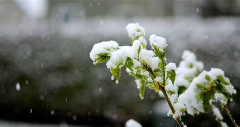 plants that will survive winter how plants survive winter learning liftoff