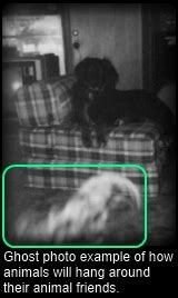 animal ghost pictures