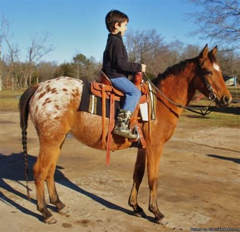 horse kid ponies safe making beginner come texas related dreams capable horses ones true rides americanlisted beaver dam tx