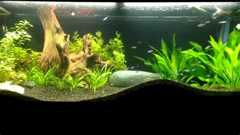 70 gal planted aquarium with musk turtles
