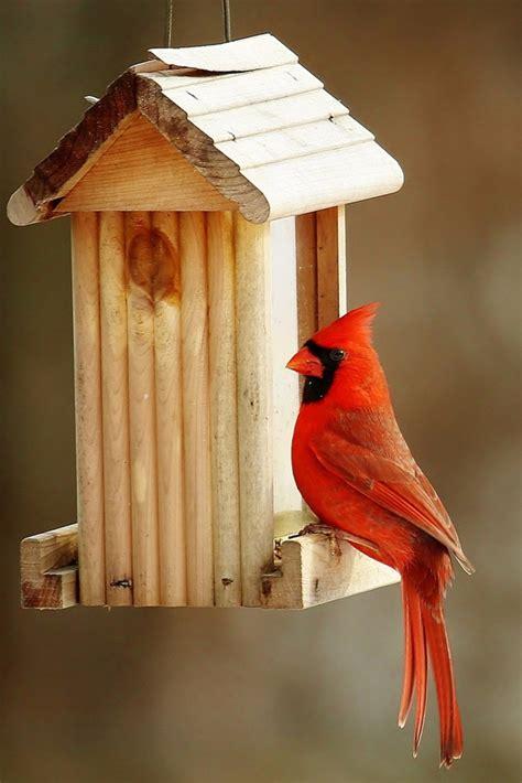 the cardinal bird feeder what works best best bird
