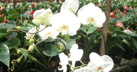 edis blog nama nama tanaman