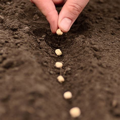 sowing seeds images image gallery planting seeds