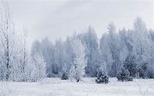 Snow Forest Wallpaper ·①