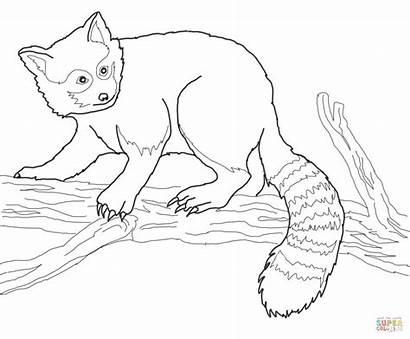 Panda Coloring Tree Pages Drawing Printable