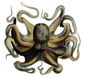Vintage Octopus Graphic