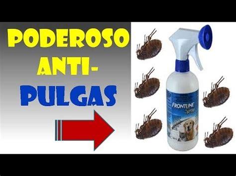 como eliminar las pulgas en perros how to eliminate fleas