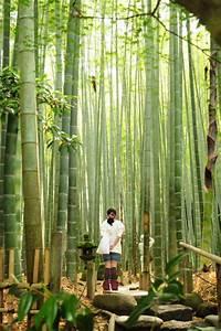 Gros Bambou Deco : bambou d co 40 id es pour un d cor jardin avec du bambou ~ Teatrodelosmanantiales.com Idées de Décoration