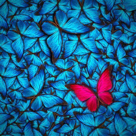 shop cluster  beautiful butterflies wallpaper