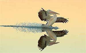 Winners and honorable mentions of the 2017 bird for Winners and honorable mentions of the 2017 bird photographer of the year