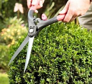 Kugel Trompetenbaum Schneiden : buchsbaum kugel schneiden bux schneiden bux formvollendet ~ Lizthompson.info Haus und Dekorationen