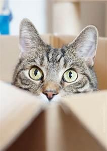 Mit Katze Umziehen : aentschies blog umzug mit katzen ~ Michelbontemps.com Haus und Dekorationen