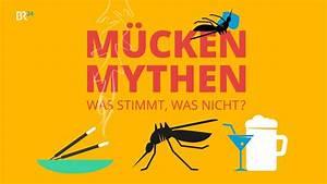 Was Mögen Mücken Nicht : was stimmt was nicht m cken mythen im fakten check wissen themen ~ Frokenaadalensverden.com Haus und Dekorationen