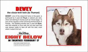 หนังสำหรับคนรักไซบีเรียน Eight Below ปฏิบัติการ 8 พันธุ์ ...