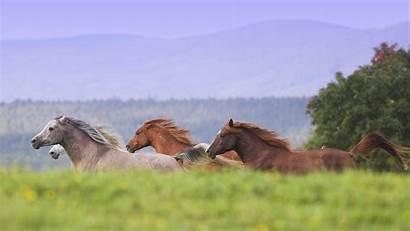 Horses Wild Horse Wallpapers Running Plus Wallpapertag