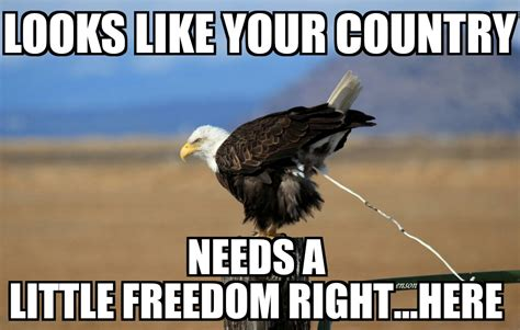 Freedom Memes - murica eagle memes image memes at relatably com