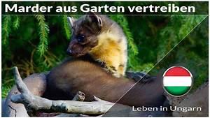 Marder Vertreiben Garten : marder aus unseren garten vertreiben leben in ungarn youtube ~ Watch28wear.com Haus und Dekorationen